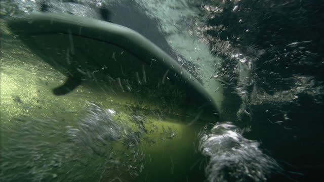 cu underwater view of paddle boards gliding on surface / aspen, colorado, usa - gliding stock videos and b-roll footage