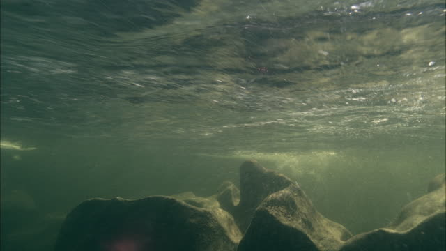 ws underwater view of paddle boards gliding on surface / aspen, colorado, usa - wildwasser fluss stock-videos und b-roll-filmmaterial
