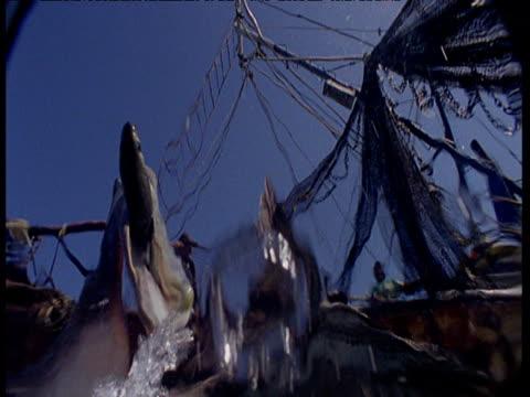 underwater view of pelicans fishing by fishing boat - tauwerk stock-videos und b-roll-filmmaterial