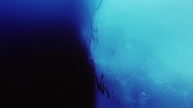underwater view of ross sea, antarctica - ross sea stock videos & royalty-free footage