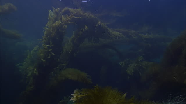 slo mo cu underwater view of sea plants / moorea, tahiti, french polynesia - sea grass plant stock videos & royalty-free footage