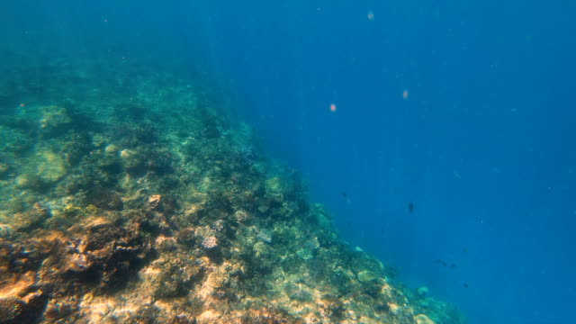 Underwater view of South sea coral reef Fiji