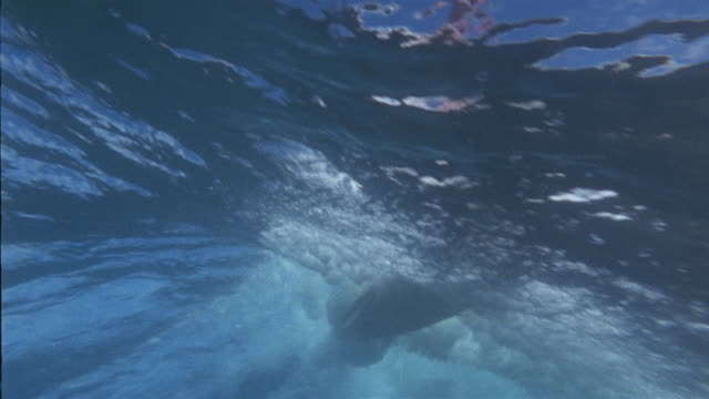 la ws pan underwater view of surfer/ oahu, hawaii - tail fin stock videos & royalty-free footage