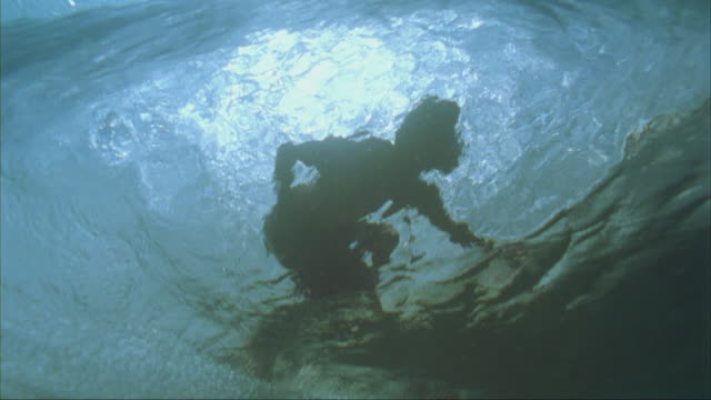 slo mo, ms, la, underwater view of surfer on ocean wave, oahu's north shore, hawaii, usa - oahu bildbanksvideor och videomaterial från bakom kulisserna