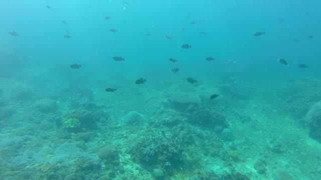 vídeos y material grabado en eventos de stock de underwater view of the blue green sea and coral reef. - slow motion - bali
