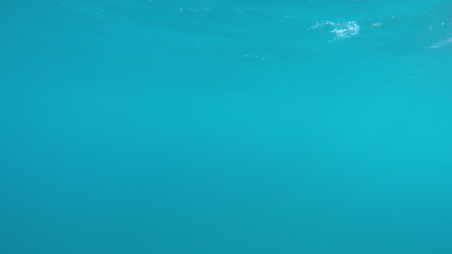 Underwater view of the blue green sea and coral reef. - Slow Motion
