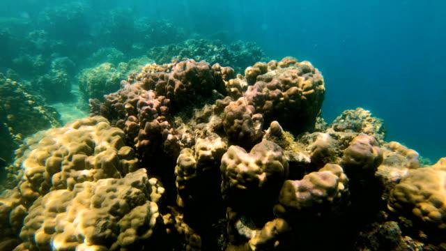 Underwater view of tropical reef South sea Fiji