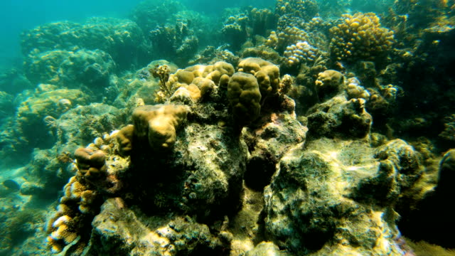 underwater view of tropical reef south sea fiji - south pacific ocean stock-videos und b-roll-filmmaterial