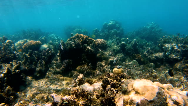 Underwater view of tropical reef South sea Fiji