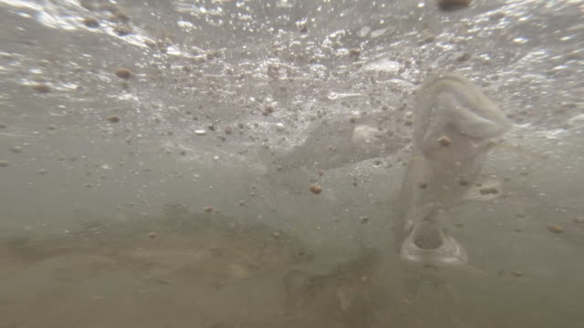 Underwater view of trout farming