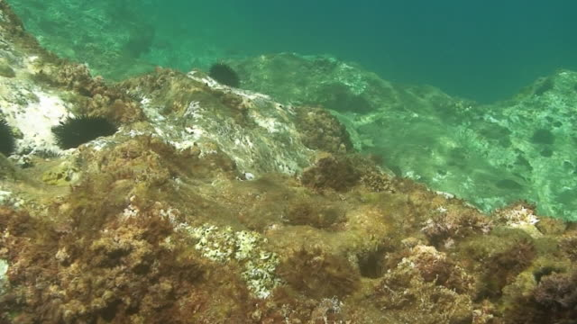underwater view - botany stock videos and b-roll footage
