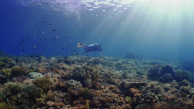 vídeos y material grabado en eventos de stock de underwater view with a diver and school of fish in komodo island - submarinismo