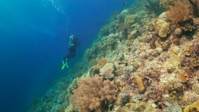 Underwater view with coral and a diver in Philippines