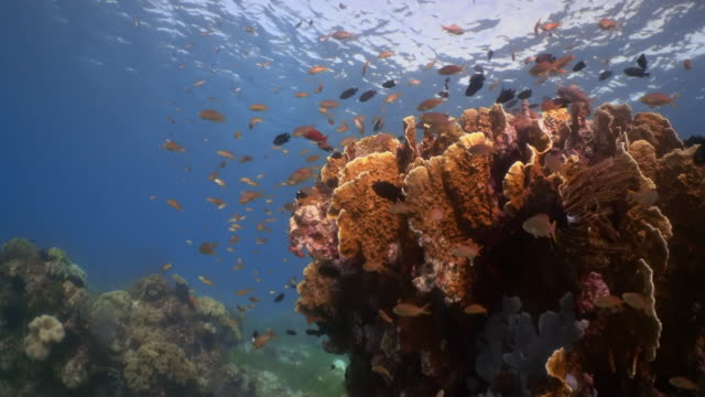 Underwater view with coral and fish in Philippines