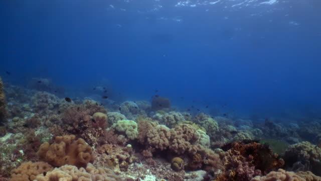 vídeos y material grabado en eventos de stock de underwater view with coral and fish in philippines - coral cnidario