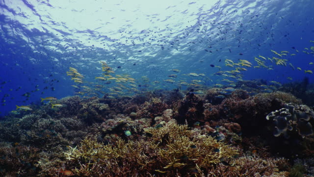 Underwater view with coral and school of fish in Komodo Island