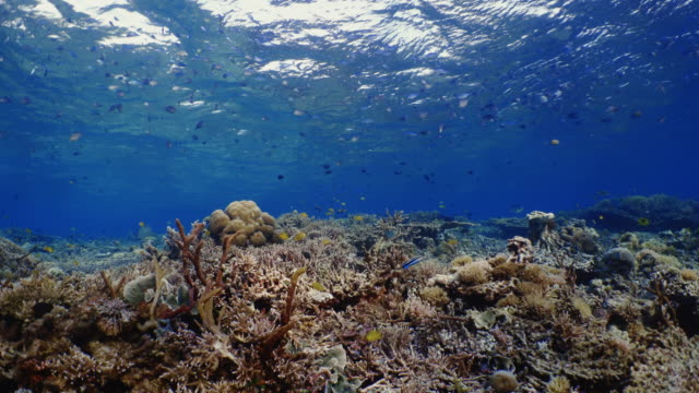 underwater view with coral and school of fish in komodo island - ecosystem stock videos and b-roll footage