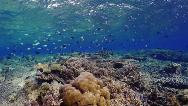 underwater view with coral and school of fish in komodo island - undersea stock videos & royalty-free footage