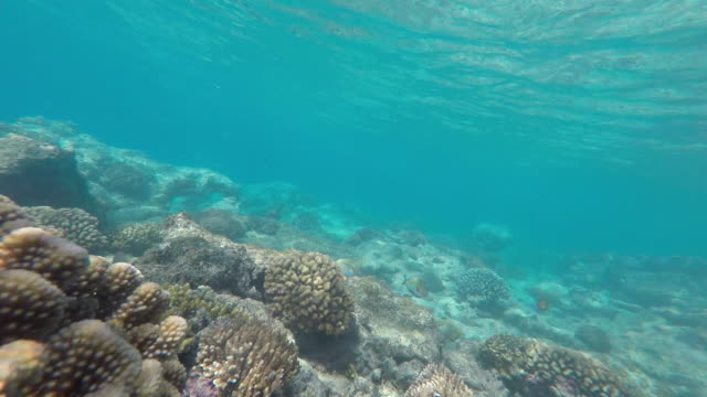 underwater view with coral and school of fish - isola di tahaa video stock e b–roll