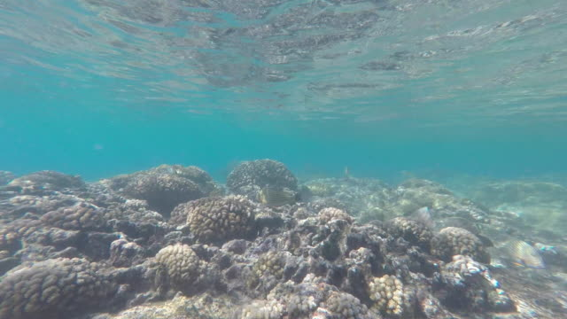 underwater view with coral and school of fish - tahaa island stock videos & royalty-free footage