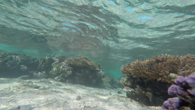 underwater view with coral and school of fish - french polynesia stock videos & royalty-free footage