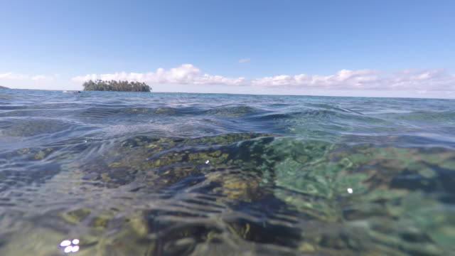 underwater view with coral and school of fish, view over the water, island - tahaa island stock videos & royalty-free footage