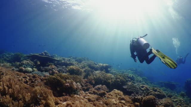 Underwater view with divers and school of fish in Komodo Island