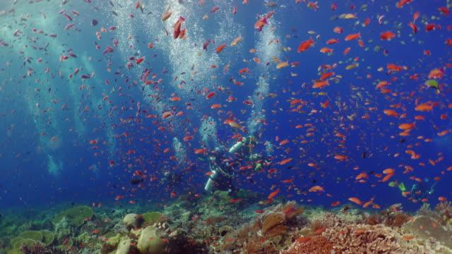 vídeos de stock e filmes b-roll de underwater view with divers and school of fish in komodo island - peixe