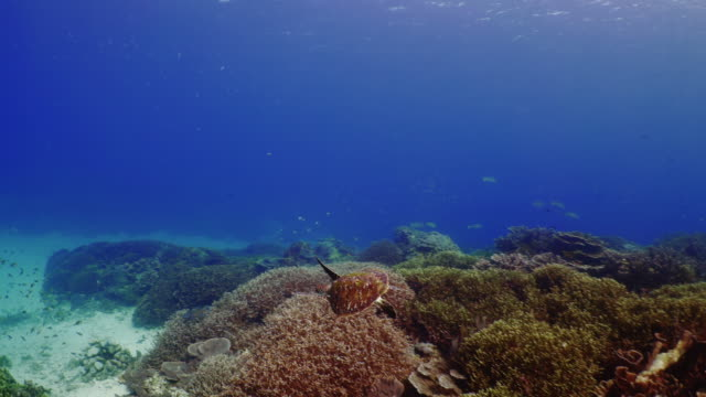 stockvideo's en b-roll-footage met underwater view with sea turtle in komodo island - oceaanbodem