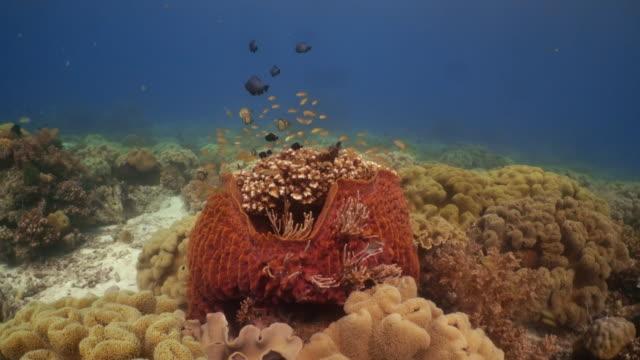 vídeos y material grabado en eventos de stock de underwater view with sponge coral and fish in philippines - esponja