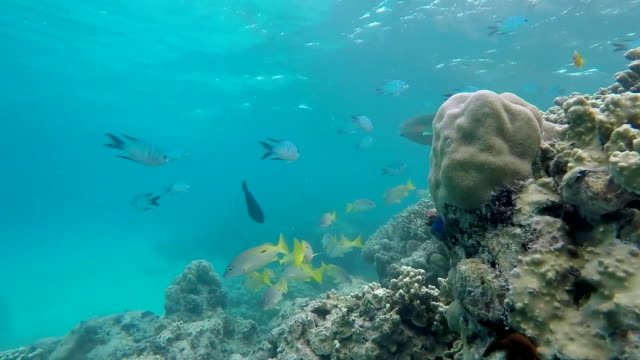 underwater views of the great barrier reef which has suffered from bleaching caused by climate change - 漂白した点の映像素材/bロール