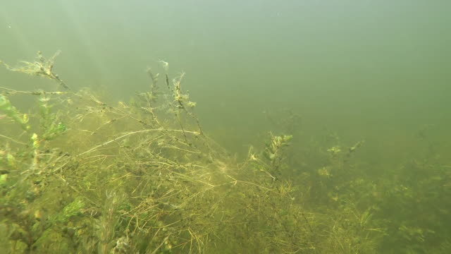 underwater volga river - pond stock videos & royalty-free footage