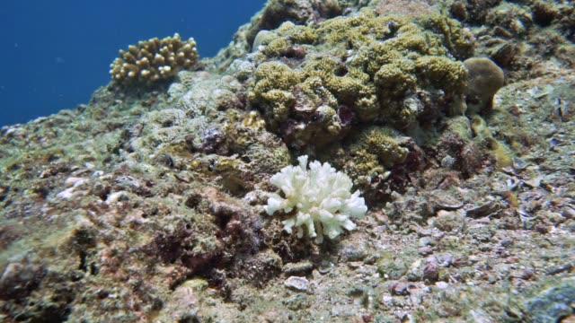 vídeos de stock e filmes b-roll de underwater white coral bleaching on coral reef - acidificação dos oceanos