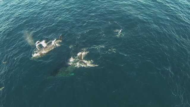 underwater wildlife and scenics, south africa - lobtailing stock videos and b-roll footage