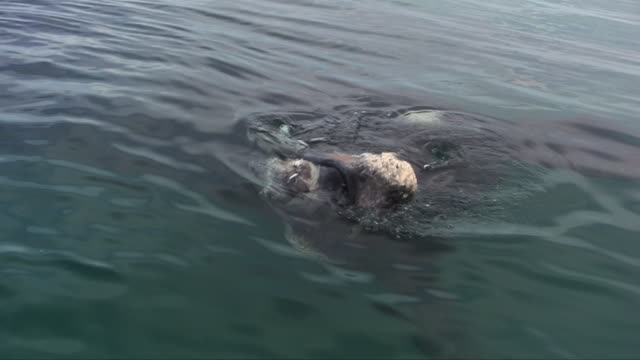 Underwater wildlife and scenics, South Africa