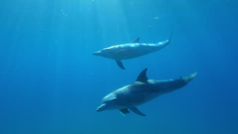 stockvideo's en b-roll-footage met underwater cu pan with bottlenosed dolphin swimming close to camera just below surface - dolfijn