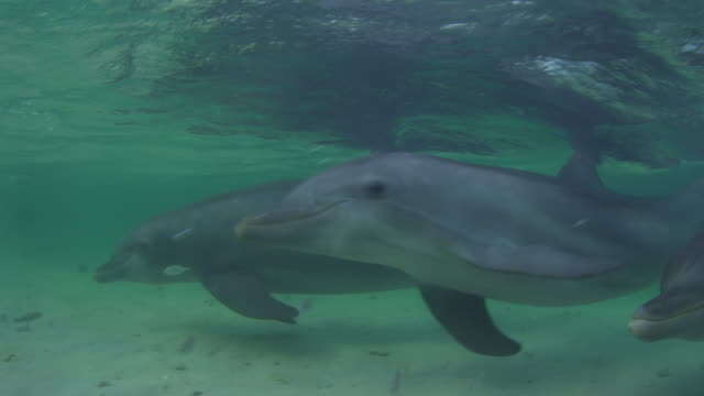 vídeos de stock, filmes e b-roll de underwater cu pan with bottlenosed dolphin swimming very close to camera in shallow sea with fish in foreground - zoologia
