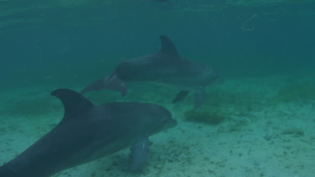 vídeos de stock, filmes e b-roll de underwater pan with bottlenosed dolphins swimming to camera over seabed through bubbles - zoologia