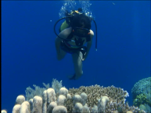 underwater pan of woman scuba diving over coral past camera / buniken island, manado / celebes / indonesia - oxygen tank stock videos and b-roll footage