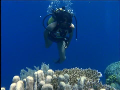 vídeos y material grabado en eventos de stock de underwater pan of woman scuba diving over coral past camera / buniken island, manado / celebes / indonesia - escafandra autónoma