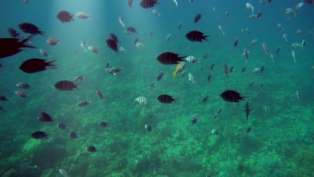 unterwasserwelt mit korallen und tropischen fischen in hurghada, ägypten. - hurghada stock-videos und b-roll-filmmaterial