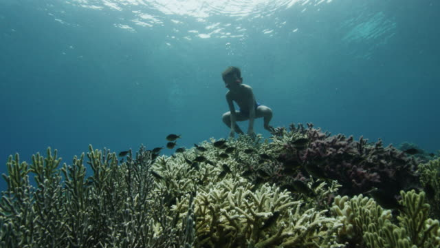 underwater pov, young boy dives to indonesian reef - underwater stock videos & royalty-free footage