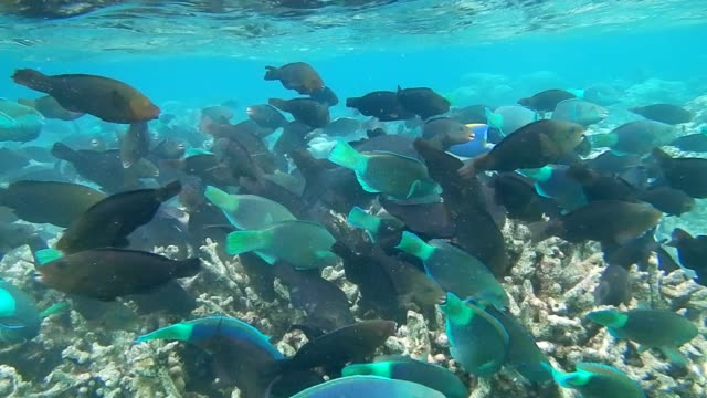 unedited footage of colorful shoal of fish on maldivian coral reef - ブダイ点の映像素材/bロール
