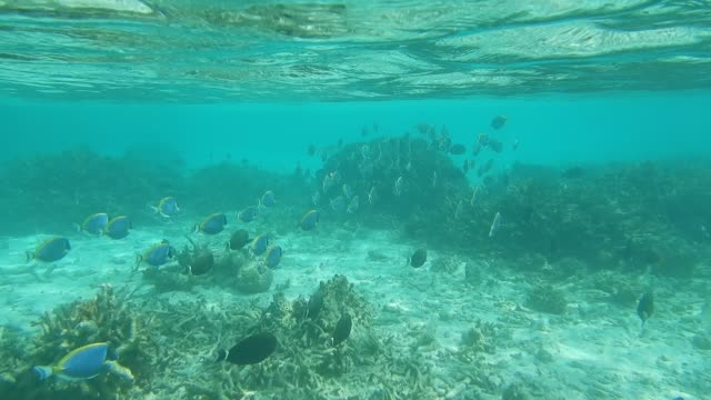 unedited footage of low tide on maldivian lagoon - surgeonfish stock videos and b-roll footage
