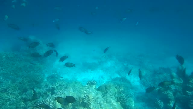 unedited video of bleached coral reef on maldivian island - surgeonfish stock videos and b-roll footage