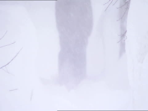 unidentifiable male form in jacket gloves walking down sidewalk path between high piles of snow slight stumbling trying to walk heavy snowing - down jacket stock videos and b-roll footage