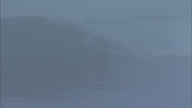 ws unidentifiable surfer wipes out on a breaking wave and grabs surfboard on foggy day in santa cruz california - falla av bildbanksvideor och videomaterial från bakom kulisserna