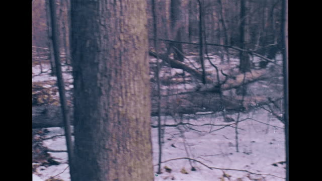 vs unidentifiable unseen workers cutting trimmed tree trunks in bare tree forest felling trees in woods w/ chainsaw two falling to right on light... - holzfäller stock-videos und b-roll-filmmaterial