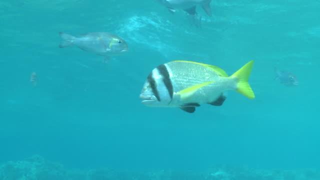 unidentified fish, antarctica - medium group of animals stock videos & royalty-free footage