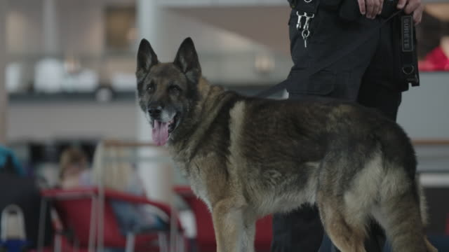 k-9 unit at airport - sicherheit stock-videos und b-roll-filmmaterial